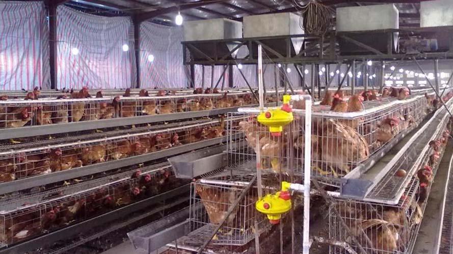 某养殖场通风降温解决方案案例